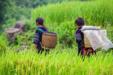 Sapa Hill Tribe Trek Off The Beaten Path 2 Days - Homestay