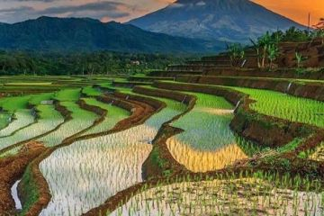 Explore Mu Cang Chai And Sapa 5 Days