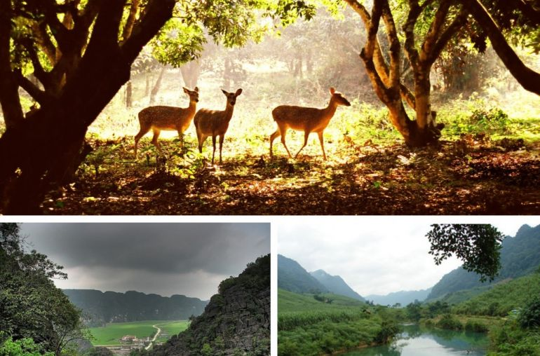 Cuc-Phuong-national-park