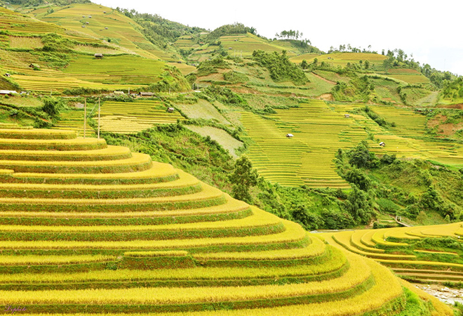 Sapa and Mu Cang Chai private tour